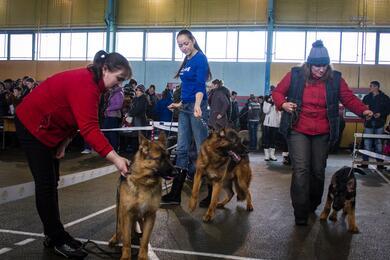 Для владельцев собак могут поднять налог. Насколько онможет вырасти