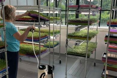 Открыла бизнес вСША ивыращивает зелень. Как переезд из-за протестов изменил жизнь пенсионерки