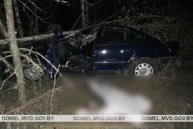 В Ветковском районе Volkswagen сбил лося— водитель погиб, пассажирка вбольнице