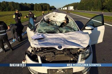 На трассе М1 лось выбежал под колеса Skoda— водитель погиб, животное пало