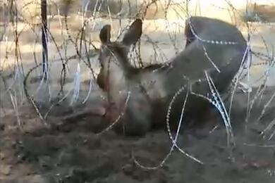 Скриншот видео: ГПК Беларуси