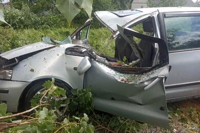 В Столинском районе дерево упало напроезжавший Volkswagen