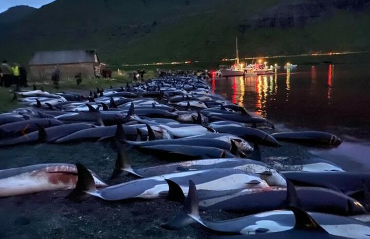 Фото: Sea Shepherd