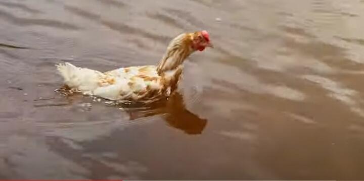 "Фото: скрин с видео сюжета медиакомпании ""Ранак"""